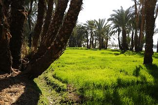 Nile Valley near Edfu