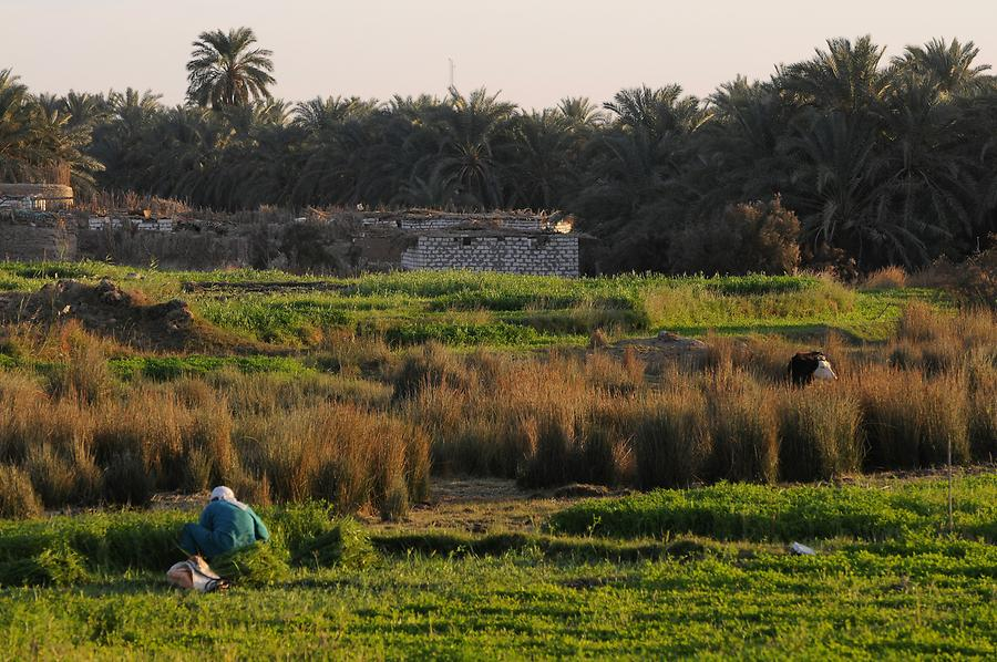 Adobe Village Kharga - Oasis
