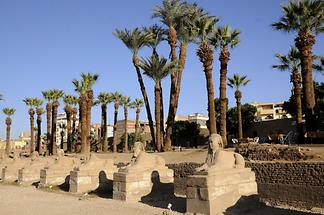 Luxor Temple Complex - Avenue of Sphinxes (1)