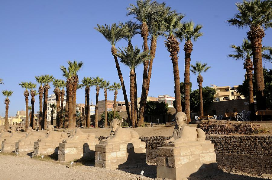 Luxor Temple Complex - Avenue of Sphinxes