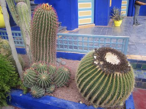 Lot of different cactus, Photo: © K. Wasmeyer 2016