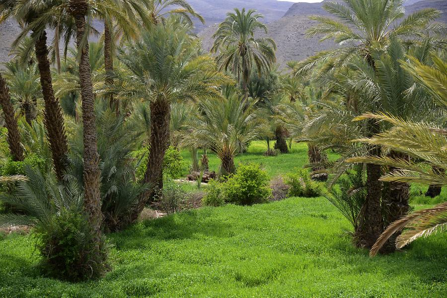 The Date Palm Oasis Tamnougalt