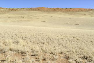 Fairy Circles in the Namib Desert (1)