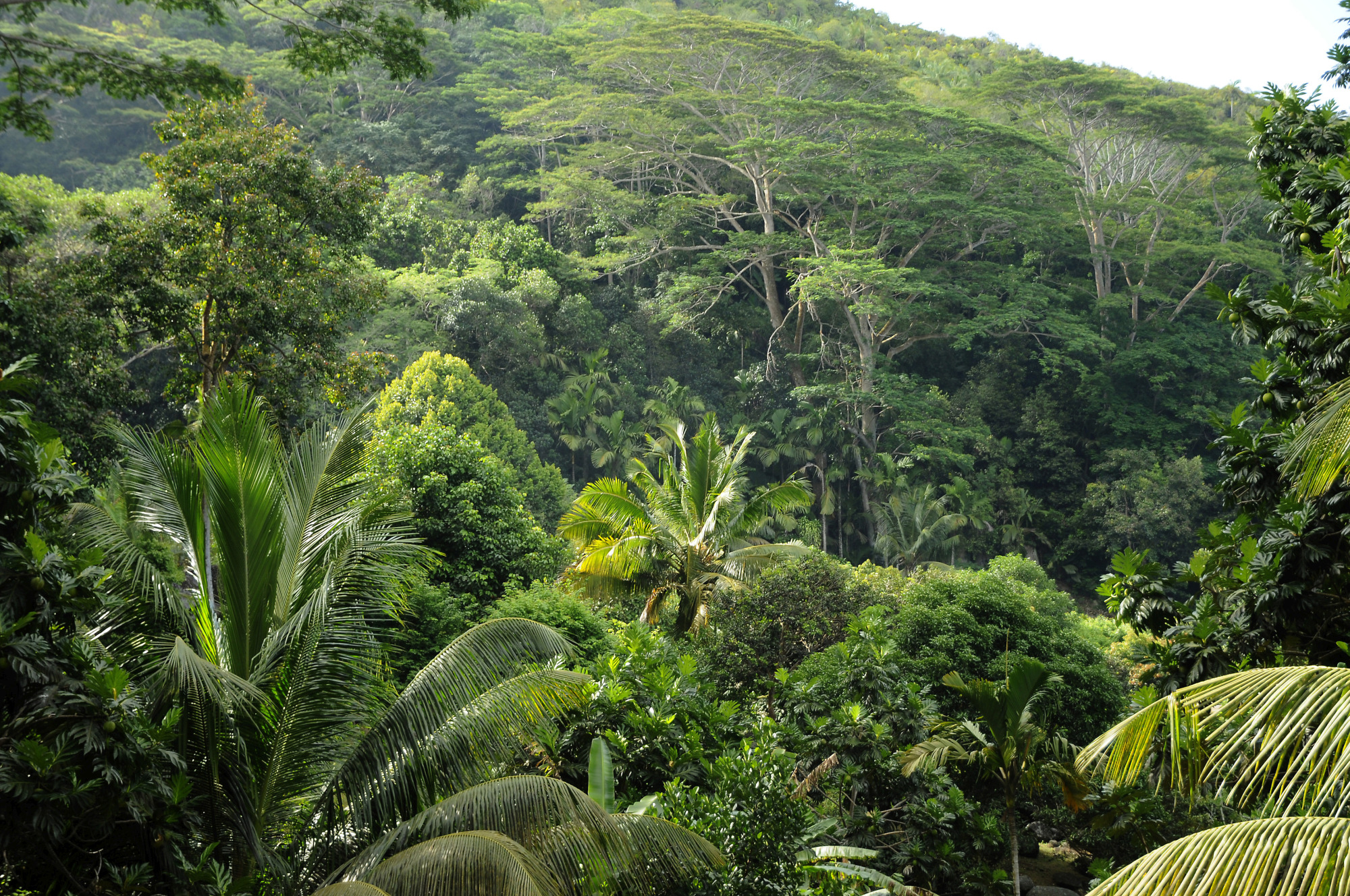Image result for seychelles forest