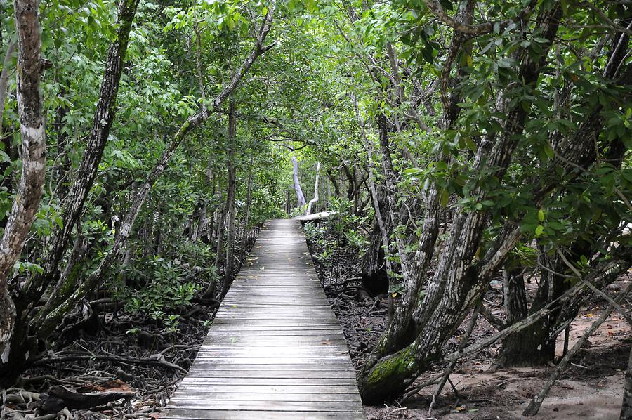 Curieuse - Mangrove Forest