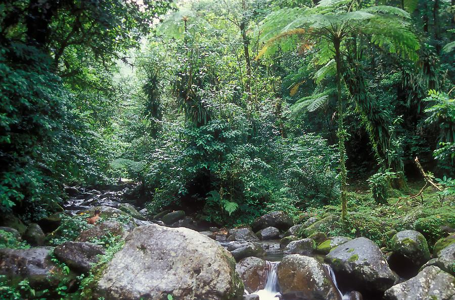 The Island's Interior - Rain Forest