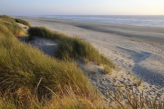 Oregon Dunes National Recreation Area - Beach (1)