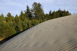 Oregon Dunes National Recreation Area (2)