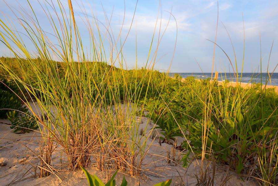 Montauk - Beach; Vegetation