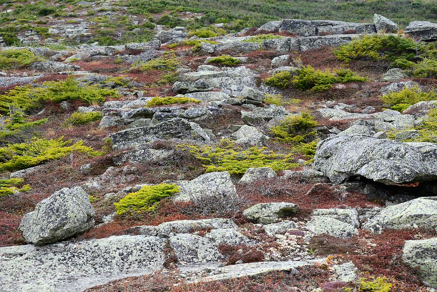 Mount Washington - Lichen