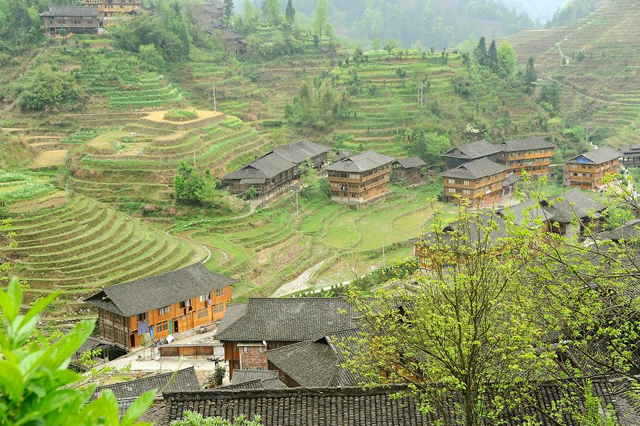 Longsheng Rice Terraces (Dragon's Backbone)
