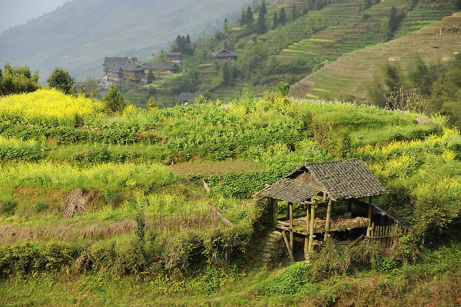 Ping'an - Rice Terraces