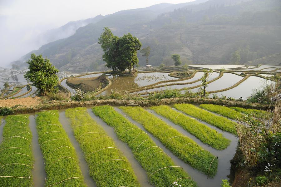 Rice Terraces near Qingkou