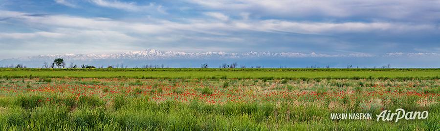 Poppies in Kyrgyzstan, © AirPano