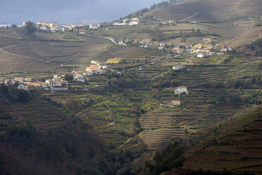 Vineyards near Lamego