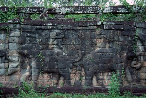 The elephant terraces had to be freed from vegetation partially before taking pictures.