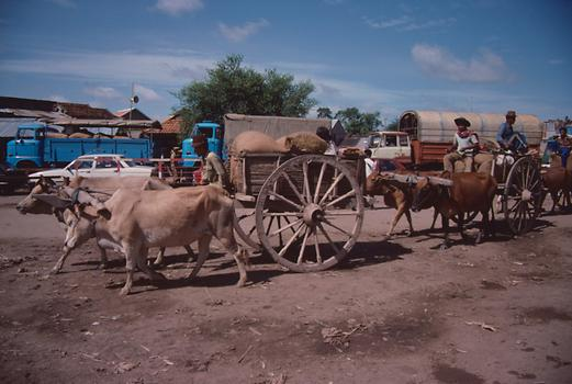 In 1990 there were still a lot of oxen chariots on the streets of Cambodia.